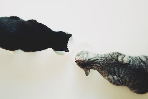 Dois gatos comem vista superior. amizade animal de estimação.