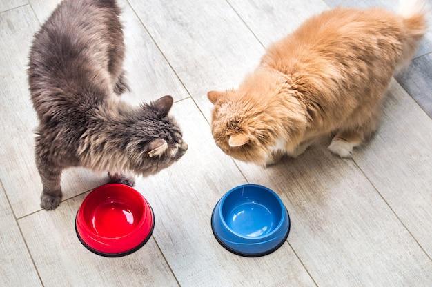 Dois gatos comendo lado a lado no chão da cozinha