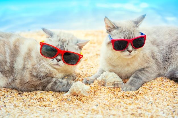 Dois gatos de óculos escuros relaxando na praia