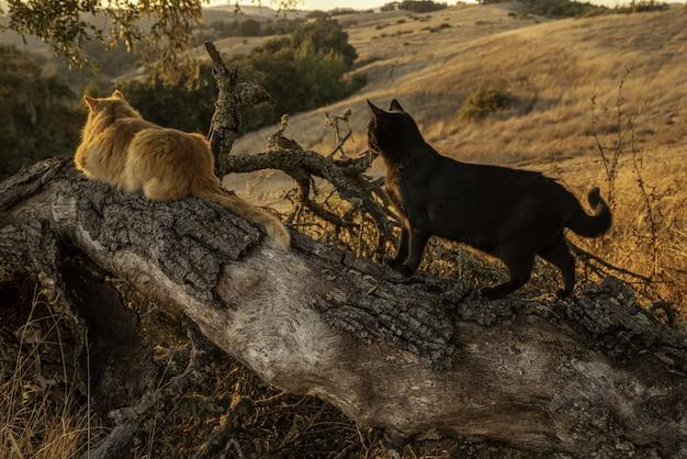 Dois gatos em um tronco