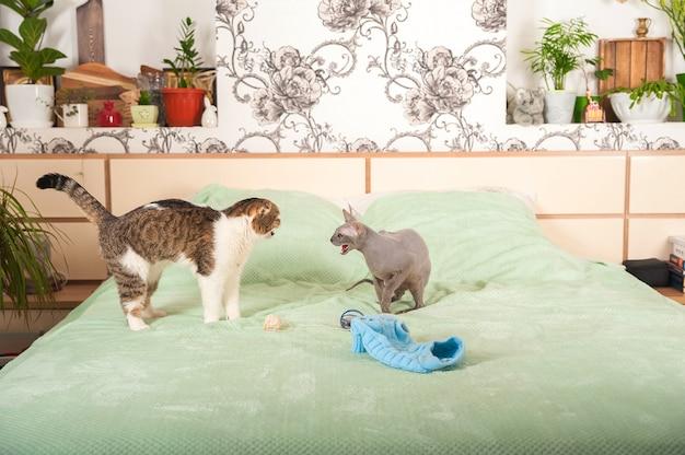 Dois gatos em uma casa brigam e fazem as pazes.