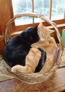 Dois gatos em uma cesta