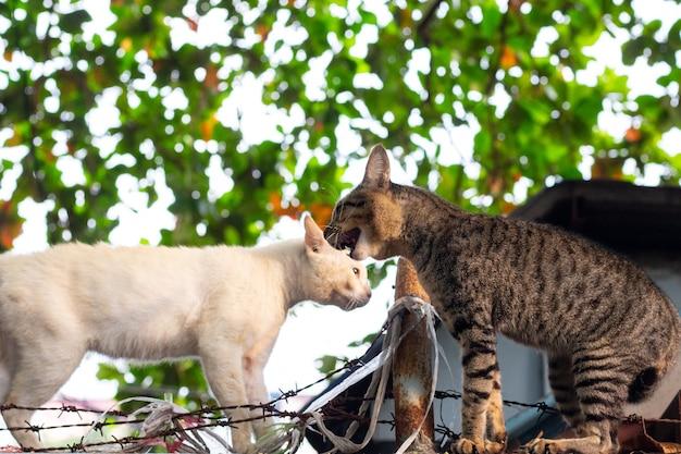 Dois gatos entram em conflito na parede.