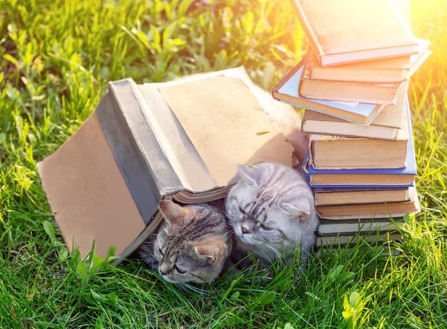 Dois gatos fofos e espertos deitados na grama perto de uma pilha de livros