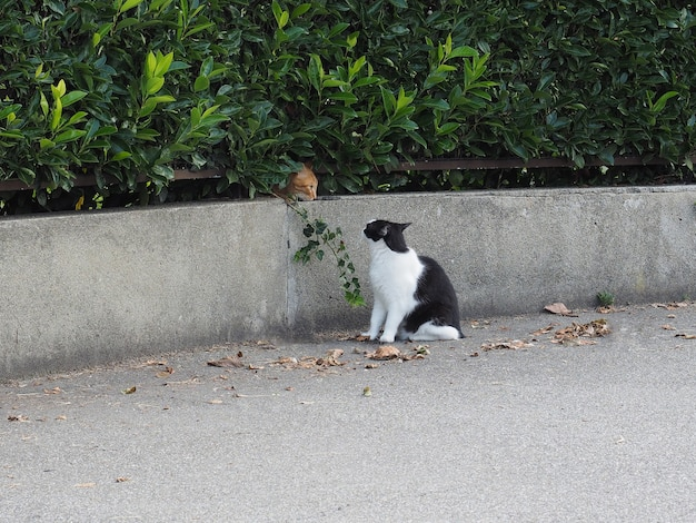 Dois gatos malhados