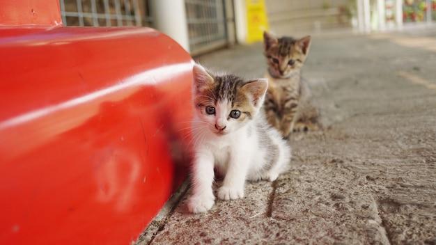 Dois gatos muito fofos no saguão da estação de trem