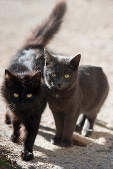 Dois gatos pretos e cinzentos olhando para a câmera
