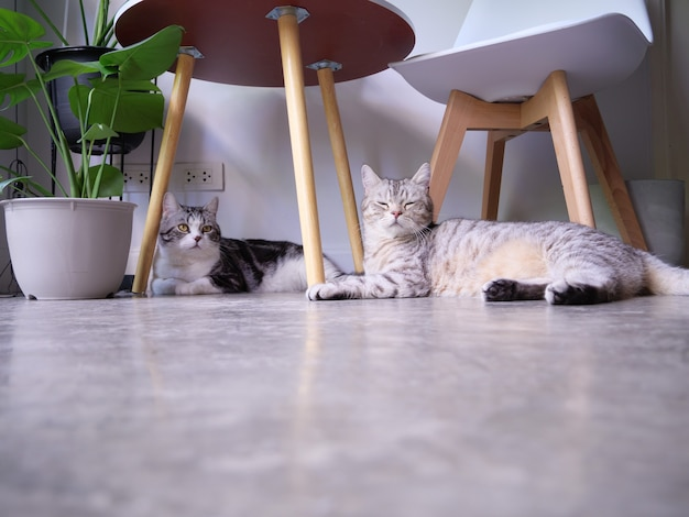 Dois gatos relaxando e dormindo no chão e a árvore purificadora de ar monstera, sansevieria na sala de estar