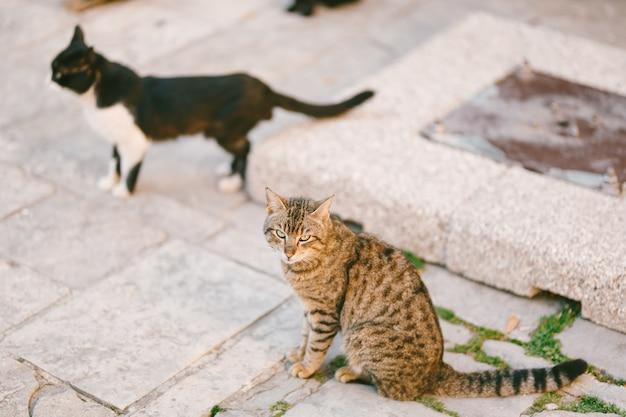 Dois gatos sentados na rua