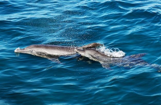 Dois golfinhos nadando juntos no mar