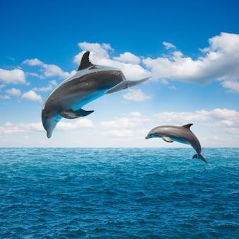 Dois golfinhos saltadores, bela vista do mar com águas profundas do oceano e nuvens