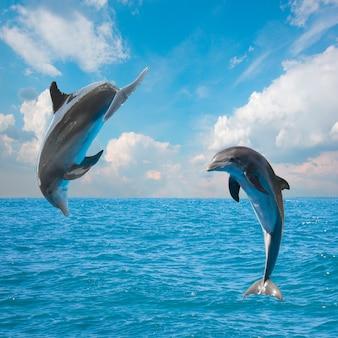 Dois golfinhos saltando, bela vista do mar com águas profundas do oceano e nuvens