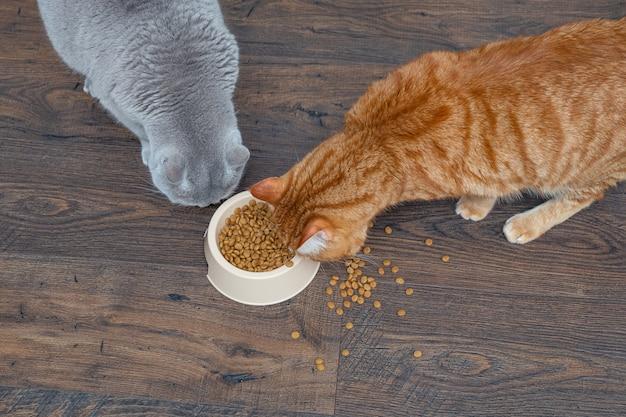 Dois grandes felinos, cinzento e vermelho, comem comida de gato seca de uma tigela. copyspace.