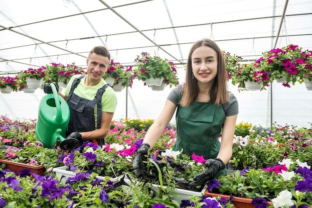 Dois jardineiros felizes em aventais trabalham com plantas de flores no jardim da estufa natural