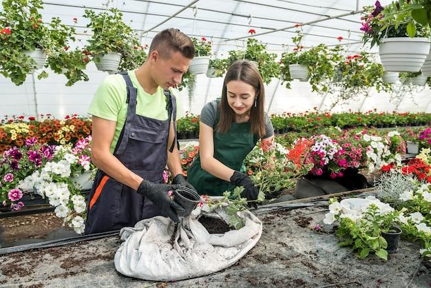 Dois jovens floristas trabalhando com flores em viveiro de estufa industrial