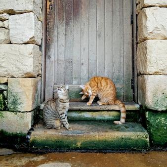 Dois jovens listrados gatos sentados nas escadas