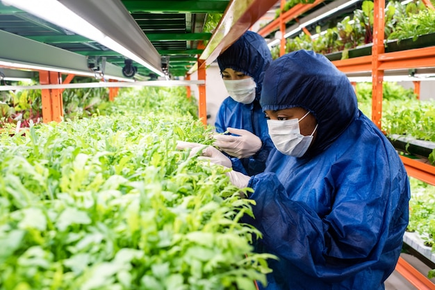 Dois jovens pesquisadores em roupas de trabalho de proteção selecionando mudas de novos tipos de plantas hortícolas enquanto trabalhavam em estufa
