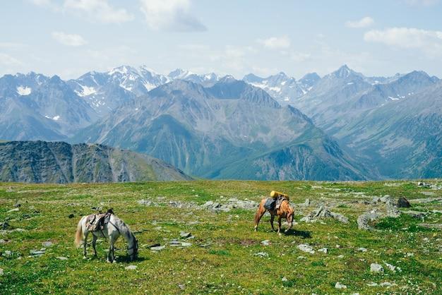 Dois lindos cavalos pastando em um prado verde alpino entre grandes montanhas nevadas