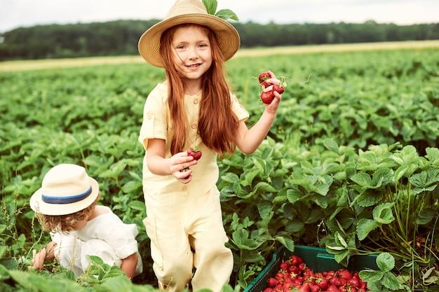 Dois lindos filhos caucasianos menino e menina colhendo morangos no campo e se divertindo