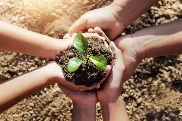 Dois, mão, ajudando, plantar, jovem, árvore, para, salvar, mundo