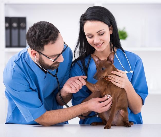 Dois médicos veterinários com cão durante o exame.