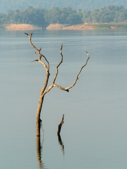 Dois obstáculos no lago pela manhã com fundo de água