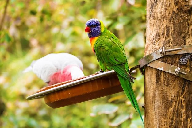 Dois papagaios comendo em paralelo