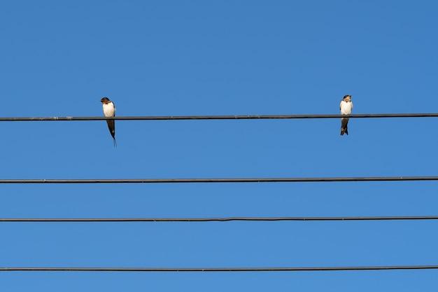 Dois pássaros em fio elétrico com fundo de céu azul