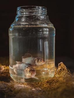Dois peixes de carpa em uma jarra de vidro em cima da mesa com uma rede de pesca.