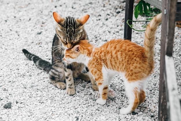 Dois pequenos gatinhos pretos e vermelhos, inclinando-se uns aos outros sobre o gr