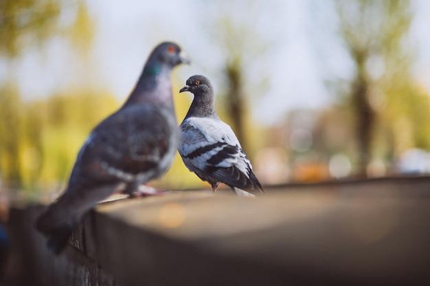 Dois, piggsons, sentando, pedra, cerca, parque