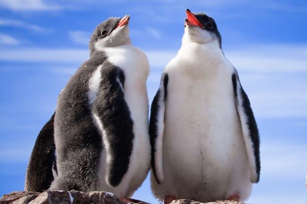 Dois pinguins na antártica