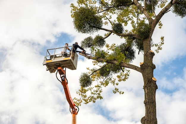 Dois prestadores de serviço cortando grandes galhos de árvores com uma serra elétrica de um guindaste elevador de cadeira