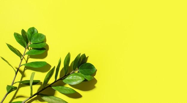 Dois ramos da planta moinho com sua sombra sobre um fundo ensolarado.