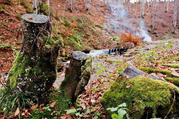 Dois tocos com musgo no outono fundo floresta rio e fumaça de fogo.