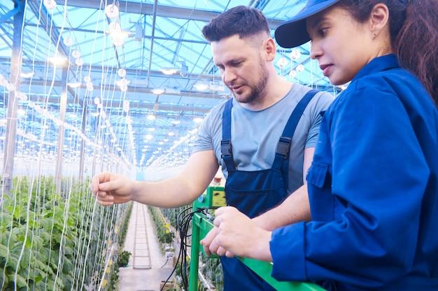 Dois trabalhadores na plantação moderna