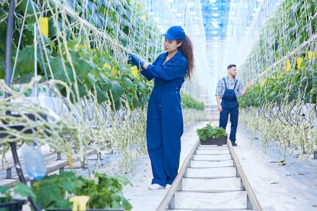 Dois trabalhadores na plantação