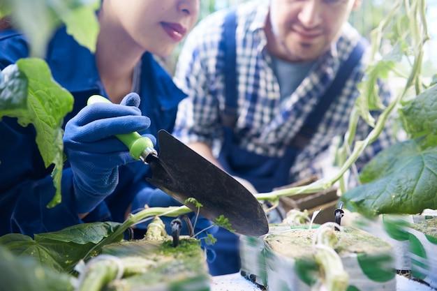 Dois trabalhadores plantando legumes