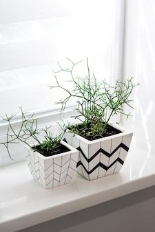 Dois vasos de flores com padrões geométricos com plantas rhipsalis plantadas ficam no peitoril da janela