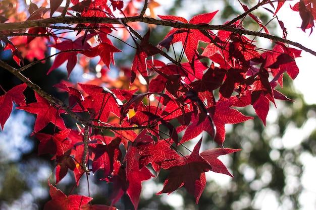Domingo na tarde de outono com bonito céu e folhas vermelhas e amarelas.
