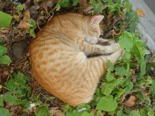 Dormir resto gato
