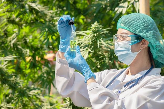 Doutor em ciência com o extrato do óleo de cannabis sativa, essencial das folhas de maconha, para plantas medicinais à base de ervas