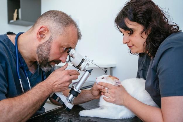 Doutor profissional que verifica dioptrias da vista em um animal idoso em uma clínica branca.