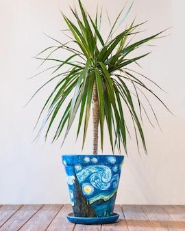 Dracaena draco no vaso abstrato pintado à mão