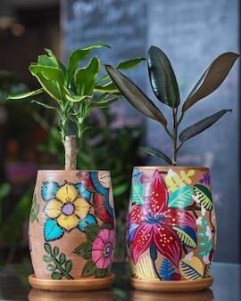 Dracaena e borracha fig ficus em panela pintada