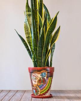 Dracaena trifasciata, planta cobra, sansevieria no vaso pintado à mão