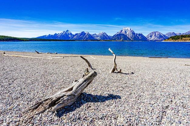 Driftwood em uma praia rochosa