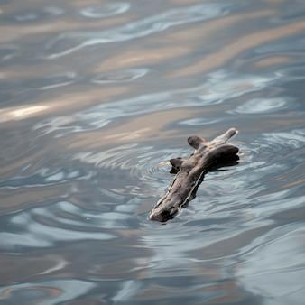 Driftwood flutuando na água no lago dos bosques, ontário