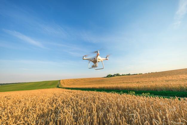 Drone quad helicóptero no campo de milho amarelo