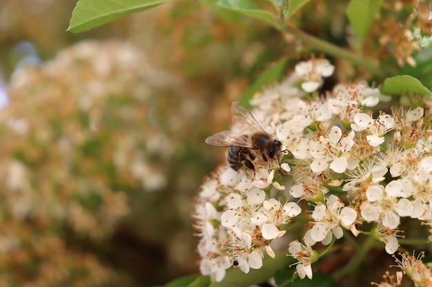Duas abelhas em uma flor